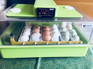 munad inku